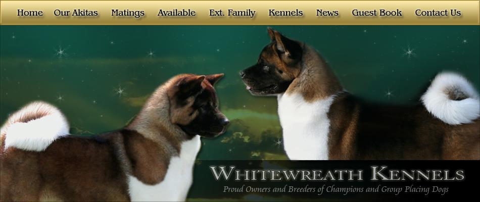 Akita Breeders UK :: Whitewreath Kennels ::